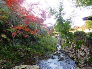 川辺 紅葉.JPG